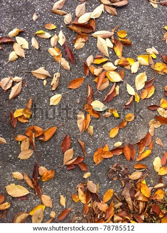 Fallen brown leaves - stock photo