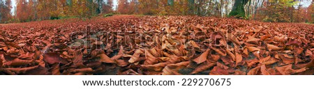 Fallen dry leaves in autumn forest - the gentle transitions of tones and colors, warm ocher and orange, golden hue, filmed as a panorama for a beautiful decorative background - stock photo