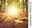 Fallen dry leaves in the park - stock photo
