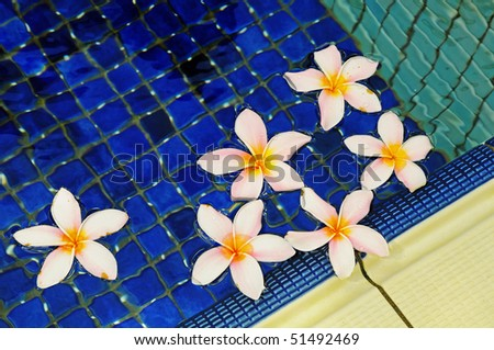 Fallen Flowers Floating On The Water Of A Swimming Pool