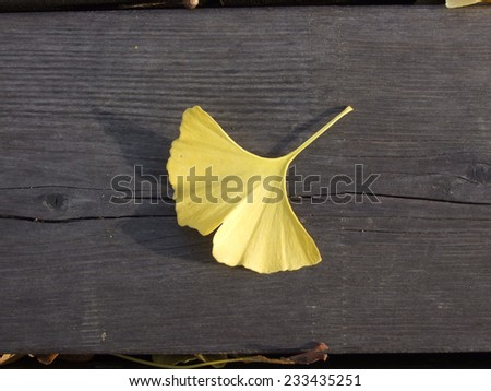 Fallen Ginkgo biloba leaf on rough wooden slats. Clinical trials have shown Ginkgo to be effective in treating dementia. - stock photo