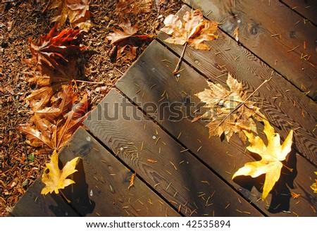 fallen leafs on the wooden footway near the Capilano suspension bridge, Vancouver, British Columnbia, Canada, North America - stock photo
