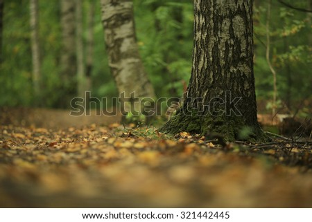 fallen leaves background - stock photo