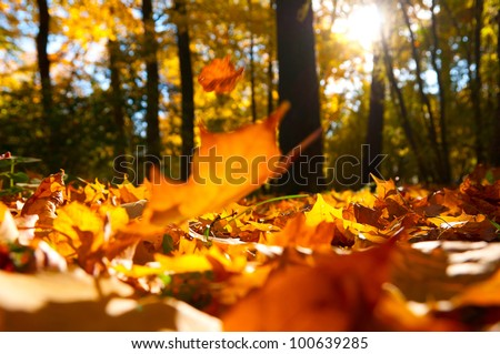 fallen leaves in autumn forest at sunny weather - stock photo