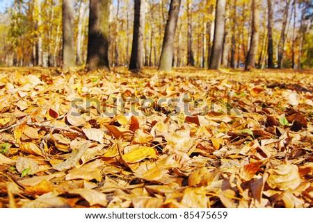 Fallen leaves in autumn park - stock photo