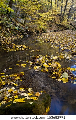 Fallen leaves in the stream flowing through Ottawa Canyon at Starved Rock State Park, Utica, Illinois. - stock photo