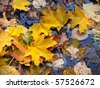 fallen leaves on the cool blue water - stock photo
