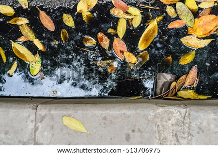 fallen leaves on the street, dark wet ground, black stagnant water