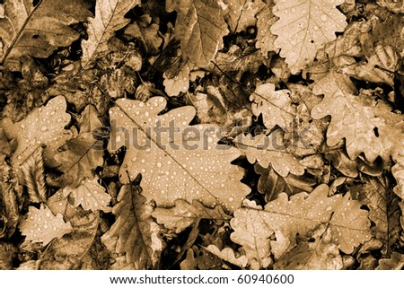 Fallen leaves with raindrops on the ground - stock photo