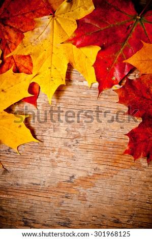 fallen maple leaves on wood, autumn concept - stock photo