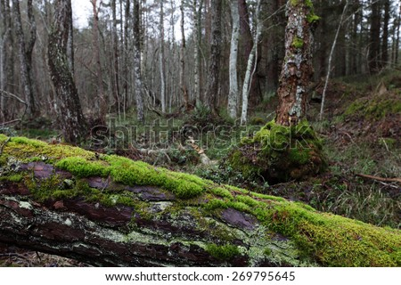 Fallen pine-tree covered with green moss in forest. Photographed in Estonia.  - stock photo
