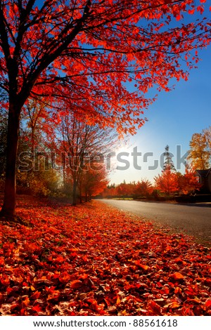 Fallen red maple leaves line the edge of a quiet road on an autumn afternoon - stock photo