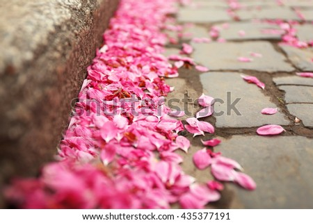 Fallen sakura petals on road