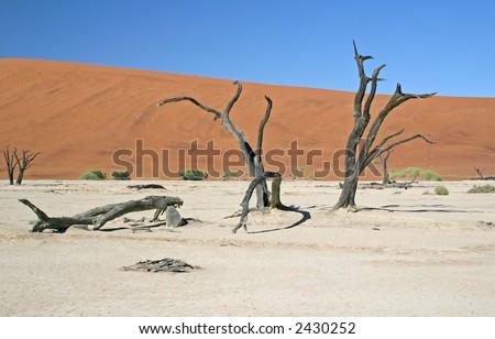 Fallen Soldier - Dead Vlei, Namibia - stock photo