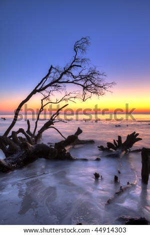 fallen tree at sunrise over the ocean, hdr image - stock photo