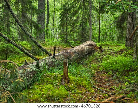 Fallen tree covered with moss lying in a dark forest