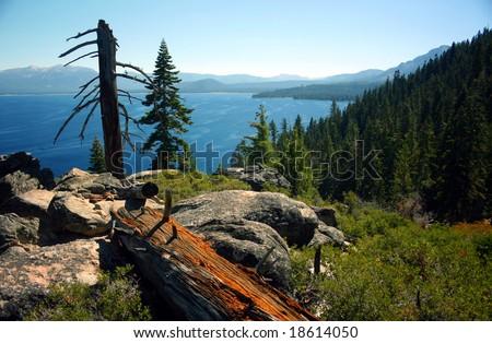 Fallen Tree in front of Lake Tahoe - stock photo