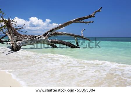 Fallen tree in the blue sea. Havelock, Andaman Islands, India - stock photo