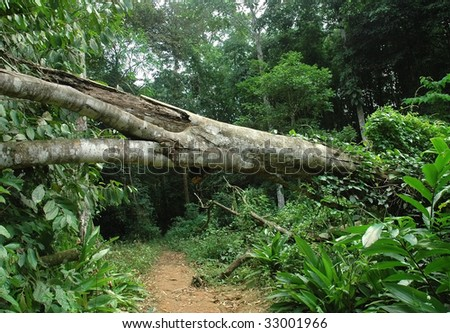 fallen tree in tropical forest - stock photo