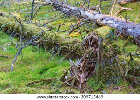 Fallen trees and a tree stump in the forest