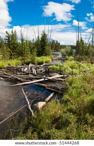 Fallen trees in a Northern Canadian river and natural forest. - stock photo