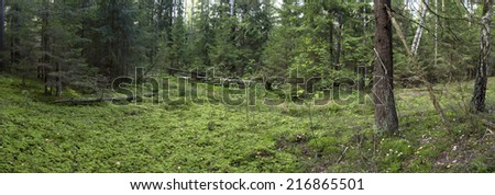 fallen trees  in the forest. wild forest median strip europe  - stock photo