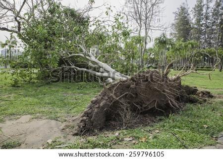 Fallen trees in the garden - stock photo