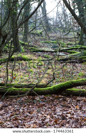 Fallen trees in the old Carpathian forest - stock photo