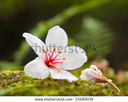 Fallen tung flowers - stock photo