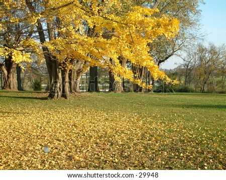 Fallin Leaves - stock photo
