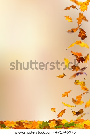 Falling autumn colored oak leaves isolated on natural background.