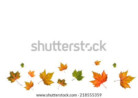 falling autumn leaves isolated