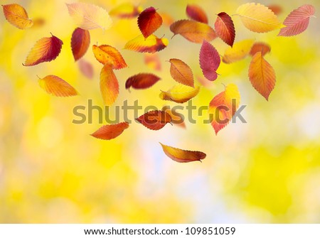Falling autumn leaves on colorful background - stock photo