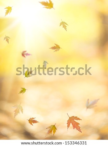 Falling autumn maple leaves against yellow sunny background - stock photo