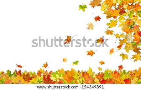 Falling autumn maple leaves isolated on white background. - stock photo