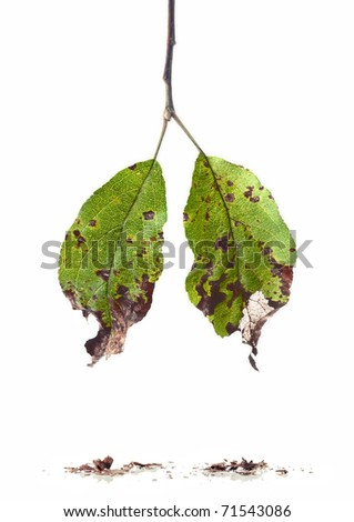 Falling ill leaves - stock photo