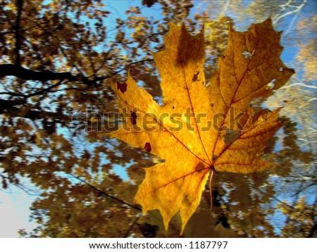 falling leaves - stock photo