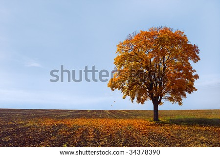 falling leaves - stock photo
