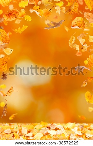 Falling leaves against the autumn background - stock photo