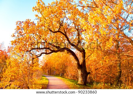 Falling Leaves Yellow Trees - stock photo