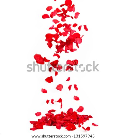 Falling petals of roses - stock photo