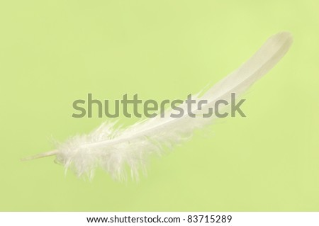 Falling white delicate bird feather close-up isolated over light green background