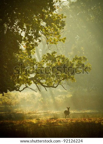 Fallow deer hind in Autumn in sunlight - stock photo