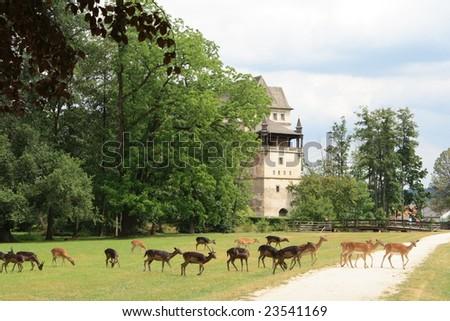 Fallow deers and Blatna castle, Czech Republic. - stock photo