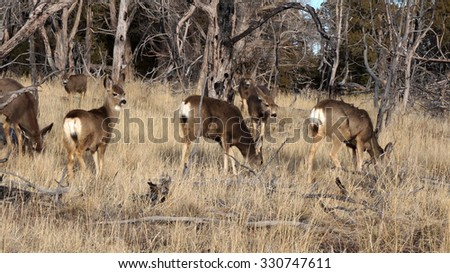 Fallow deers making their way into the forest - stock photo