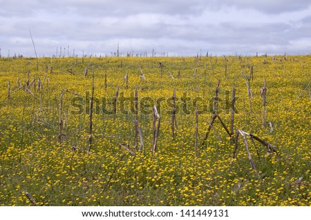 Fallow field - stock photo