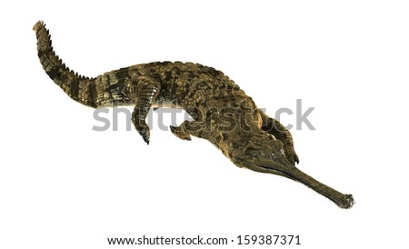 False gharial