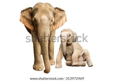 Family elephant on isolated. - stock photo