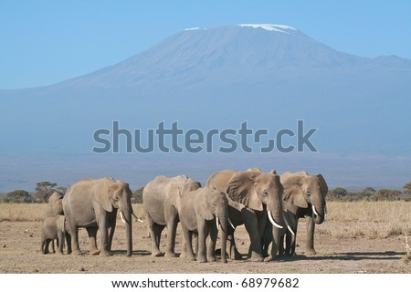 Family group of elephants resting in the open with Mount Kilimanjaro in the background - stock photo