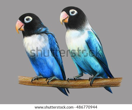 Family masked lovebird drawing on gray background